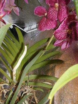 Orchidofolie