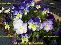St Fiacre :Patron des jardinières et jardiniers