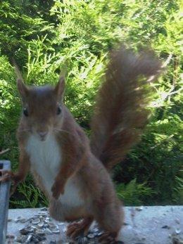 ecureuil faisant la star