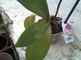 orchidée sur orchidée