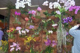 Orchidées à Pau