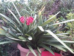 Idées de plantes à offrir