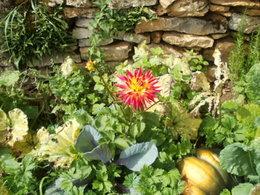 A mes ami(e) . . . jardinautes de mon coeur !!
