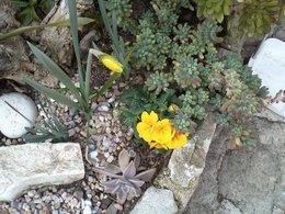 premières fleurs dans mon jardin