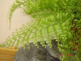 Mes plantes d'intérieur