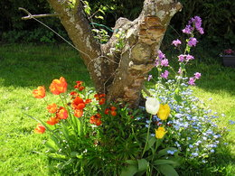 Des fleurs pour tous les jardinautes