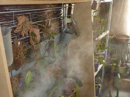 Mini orchidée, refleurira, refleurira pas ???