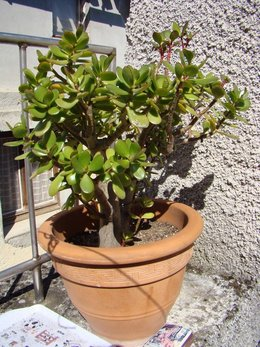 Les plantes de ma terrasse!