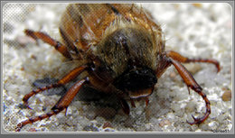 Insecte . . . . à garder ou à zigouiller ?