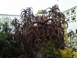 Orchidée grignotée . . .