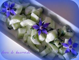 Bourrache - Borago officinalis