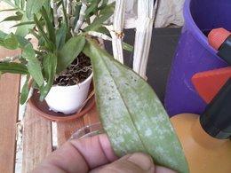 orchidées .........