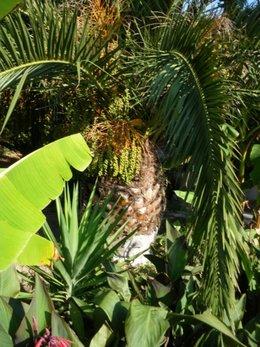 Vous avez un palmier :