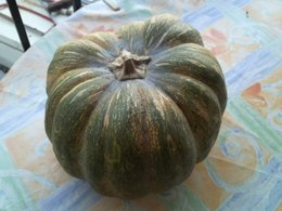 courge mure