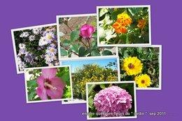 Floraisons de septembre