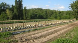 TOMATES : L'HEURE APPROCHE !