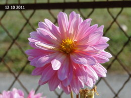 Jolie . . . remontée florale automnale !!