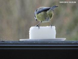 Nourrir les oiseaux en hiver au jardin