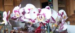 Toutes vos questions sur la culture de vos orchidées