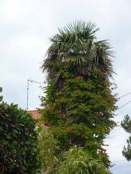Fleurir le tronc d'un arbre