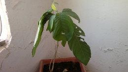 qui connait cette plante??