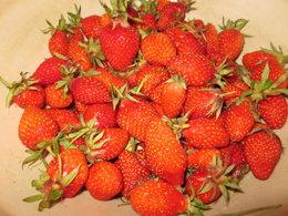 ramassage des fraises.