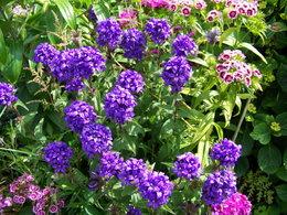 plante sens nom