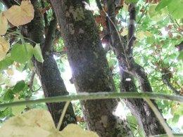 maladie arbre