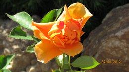 rose visagiste