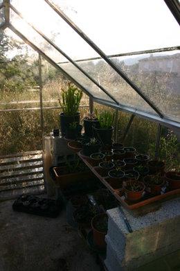 voici quelques plantes diférente