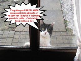 Problème avec les chats errants