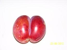 prune reine claude rosée
