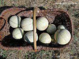 melons et concombres