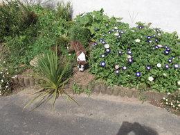 De l'aide au jardin..!!!