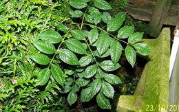 Merci d'identifier cette plante - Photo 3
