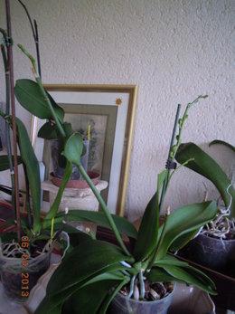 Posez toutes vos questions sur la culture des Orchidées