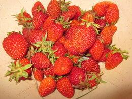 Mettez-vous des filets de protection contres les oiseaux sur les fraisiers ?