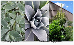 Identification plante