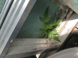 une autre plante a identifier.