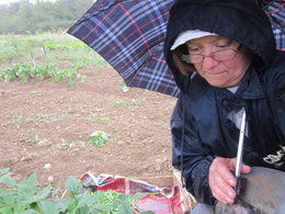 désastre de la pluie