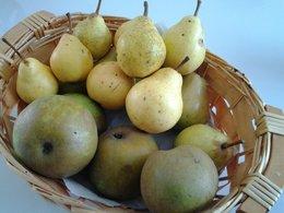pommes, poires.