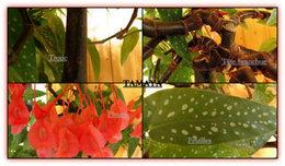 Bégonia bambou - Tamaya