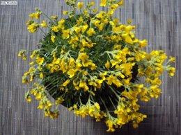 Quelques fleurs pour ce dimanche . . .