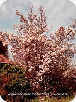 sur les traces du plus bel arbre d'avril