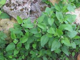 Help sur 2 plantes à identifier