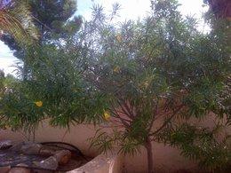 quel nom pour cet arbuste??
