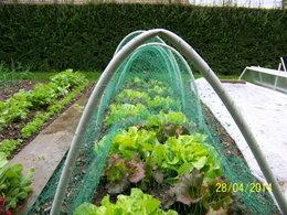 legumes du jardin