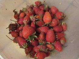 fraises;
