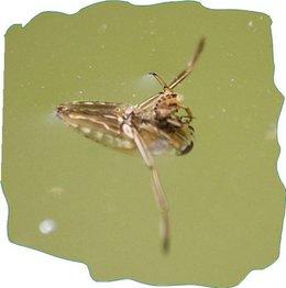 Quel est cet insecte!!!