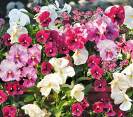 Plantes fleuries d'hiver